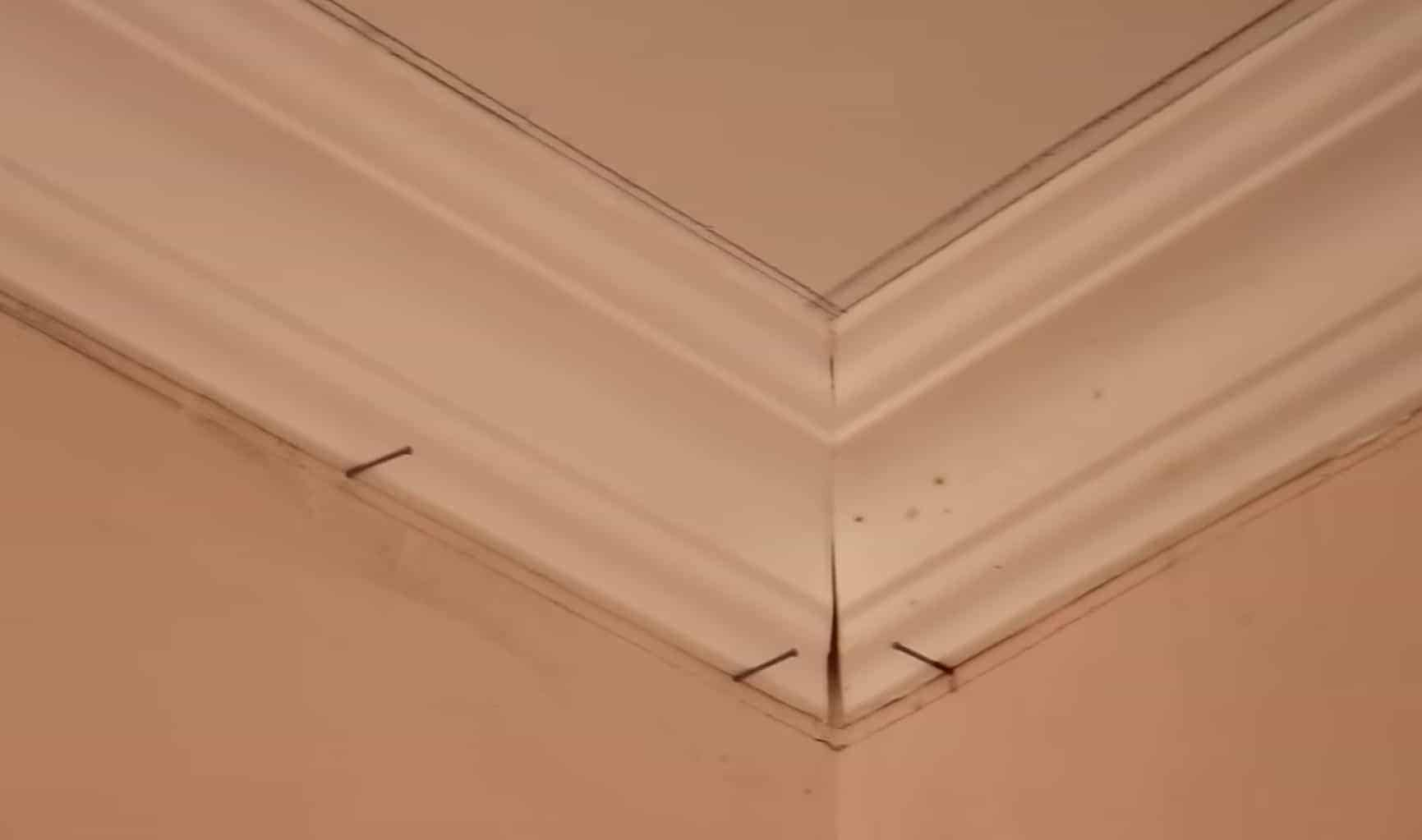 How To Fit Coving Installation Guide The Carpenter S Daughter