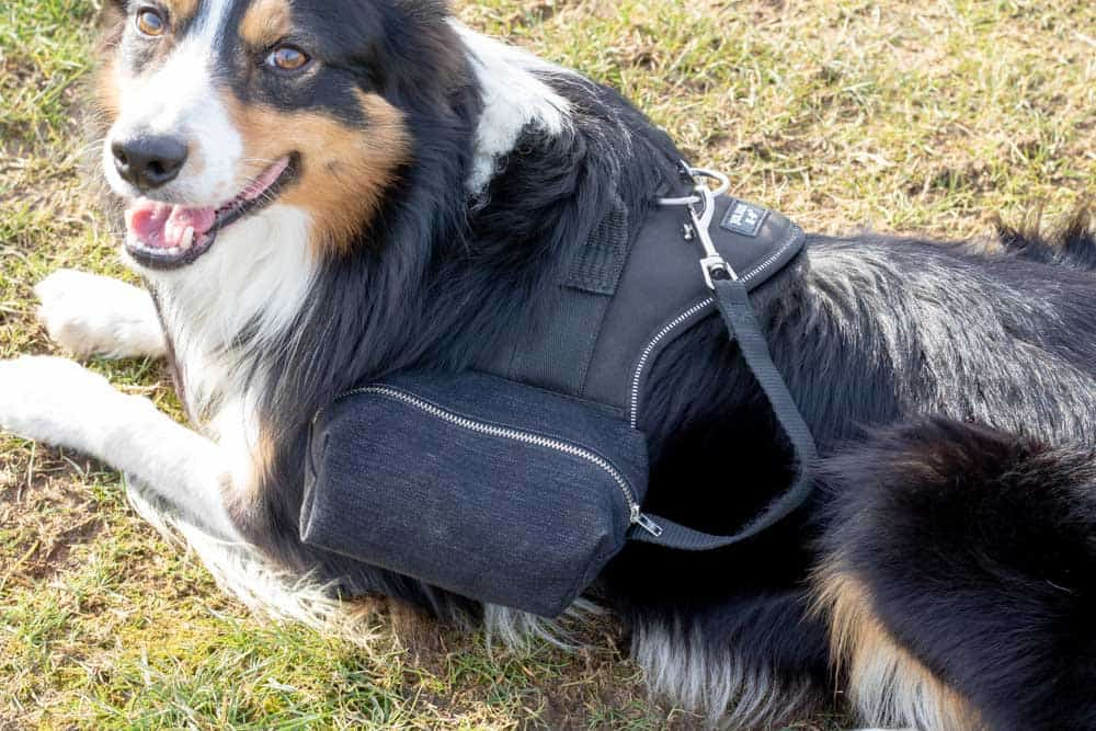 DIY Dog Backpack with side pouches
