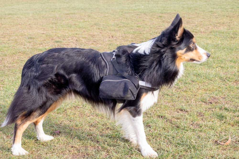 Custom made DIY Dog Backpack for Julius K9 harness