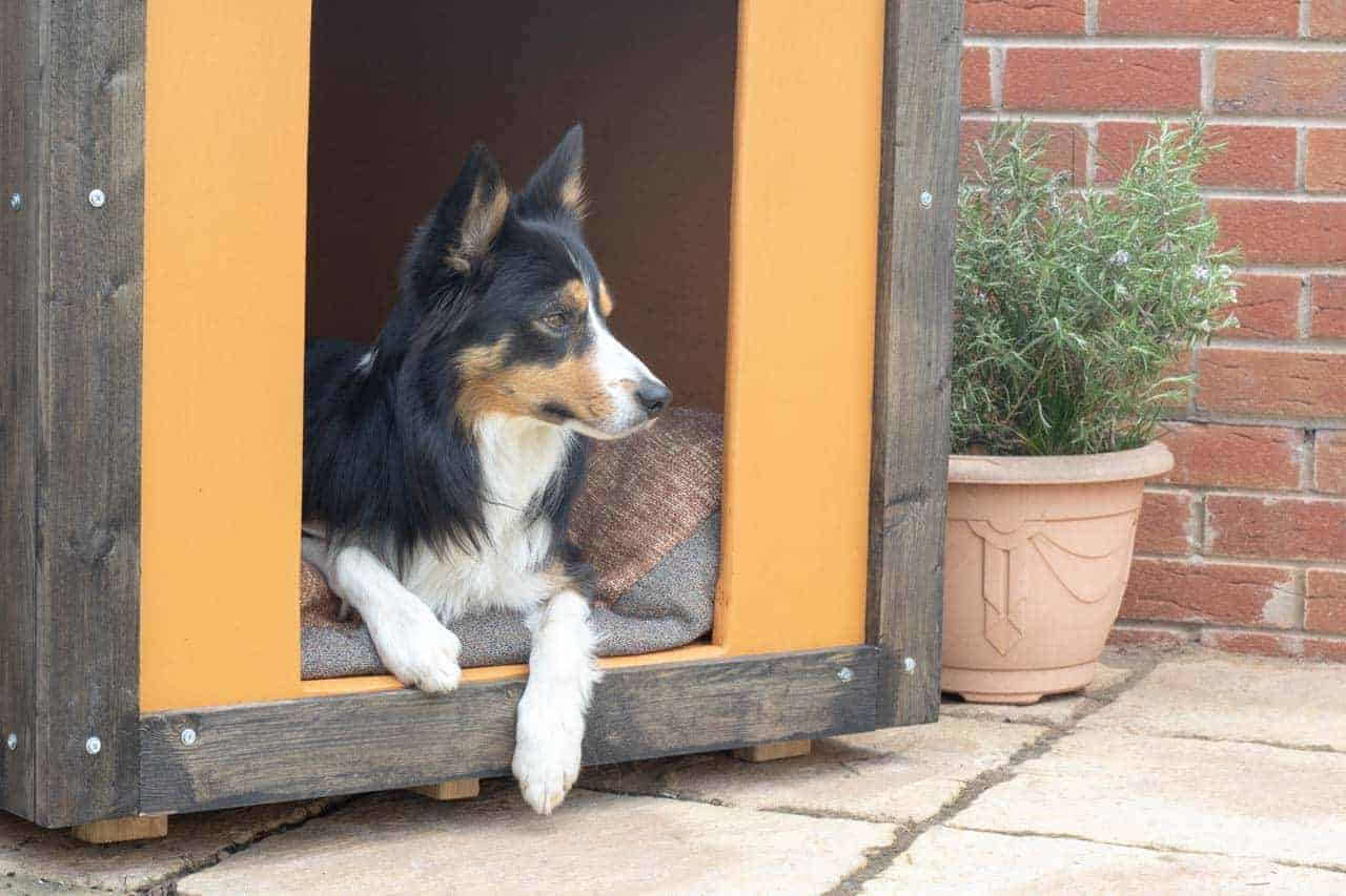 Border Collie relaxing in kennel