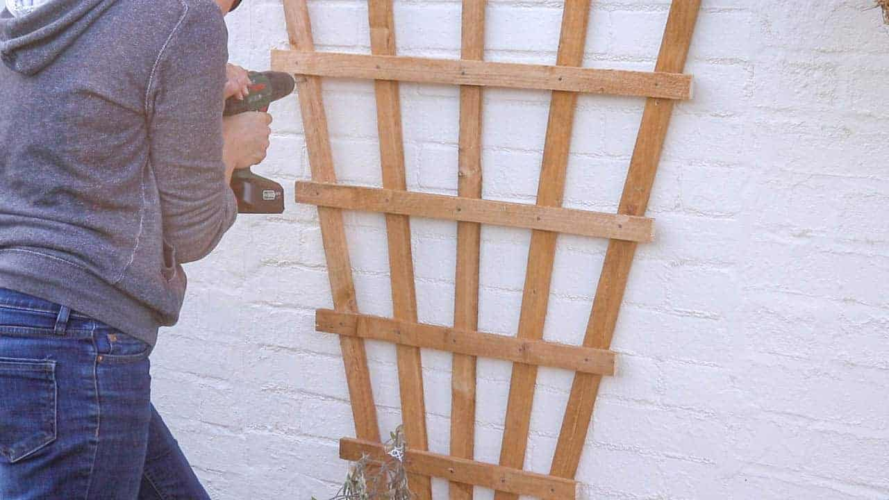 last trellis screws