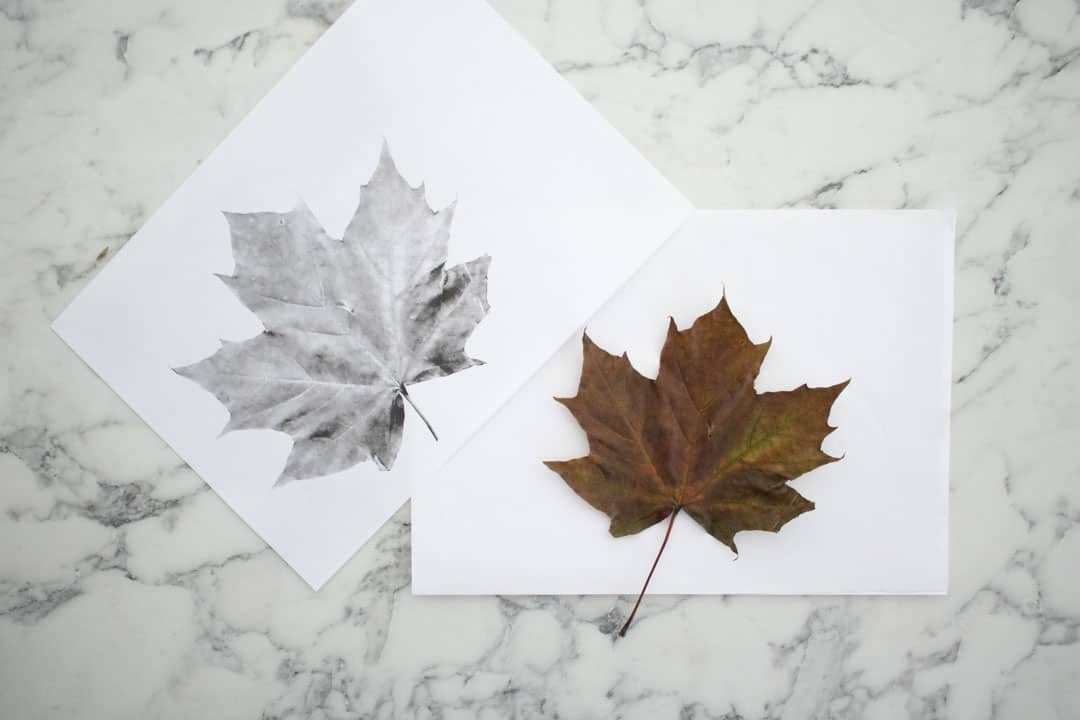 leaf print out